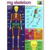 My Skeleton Wall Chart / Poster - 76cm x 52cm